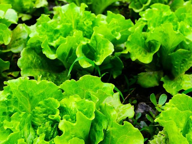 The Power of Green-園藝治療如何豐盛我們的身、心、靈?